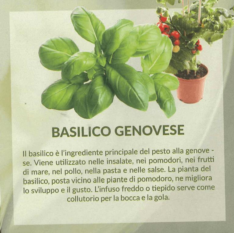 basilicogen