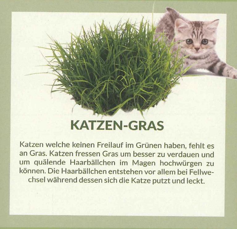 katzengras_