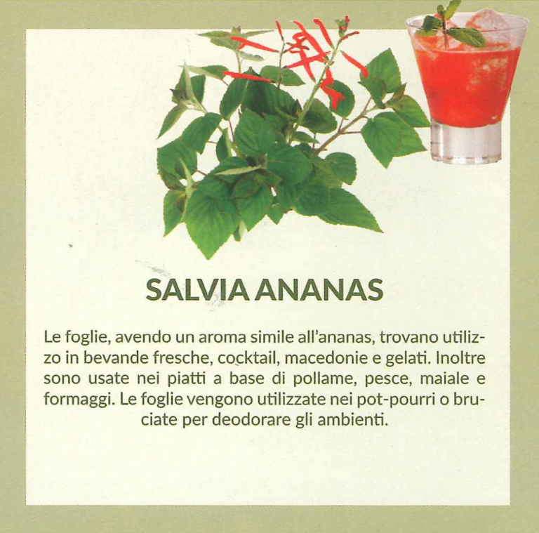salviaananas