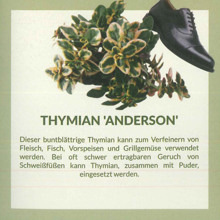 thymian anderson